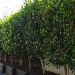 Hedges & Columns